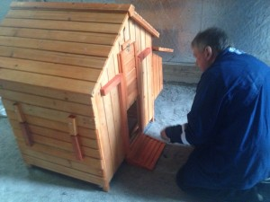 Chris builds my coop.  Yes it's little but I want to start out small.